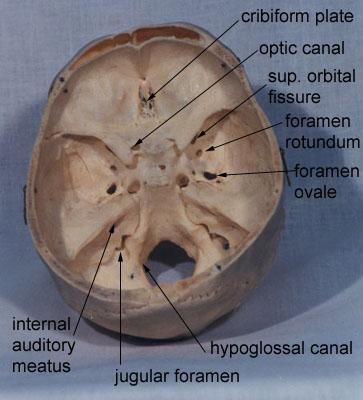 Gross anatomy of cranial nerve foramen (source)