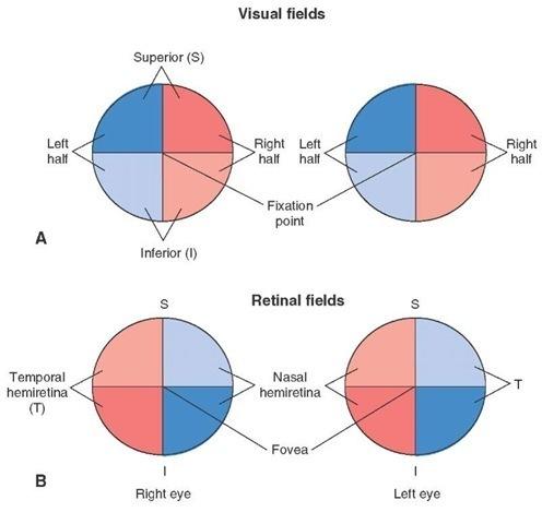 Visual field quadrants in both eyes (source)