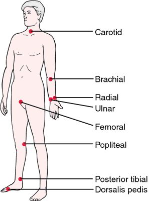 Anatomical pulse locations (source)