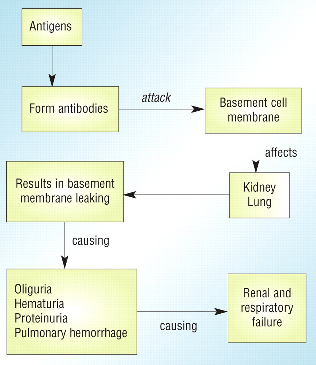 Pathophysiology of Goodpasture syndrome (source)