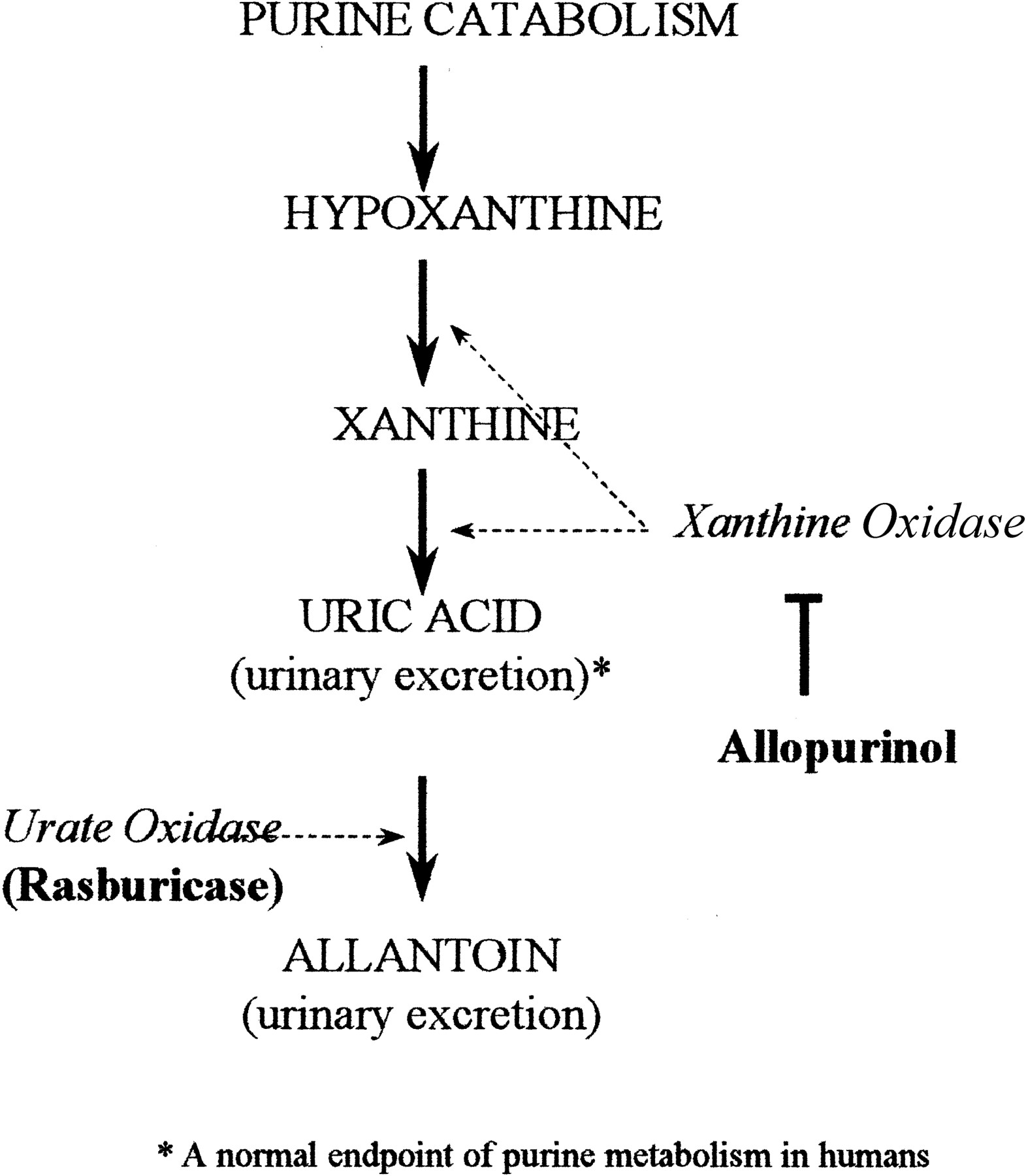 Relevant metabolic pathway for rasburicase mechanism of action (source)