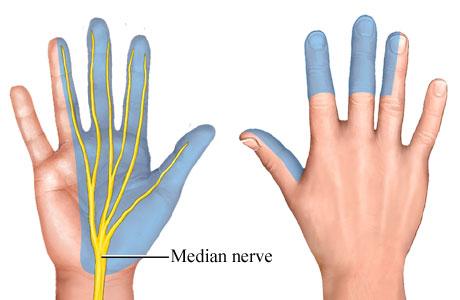 Sensory distribution of median nerve (source)