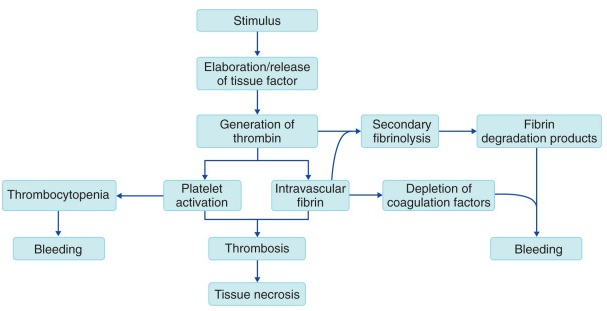 General pathophysiological outline of DIC (source)