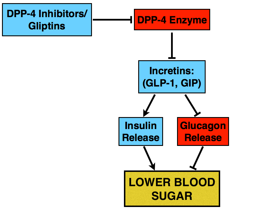 DDP-4 inhibitor mechanism of action.