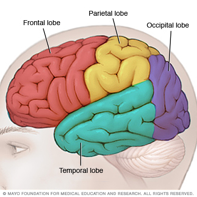 Location of the frontal lobe of the brain (source)