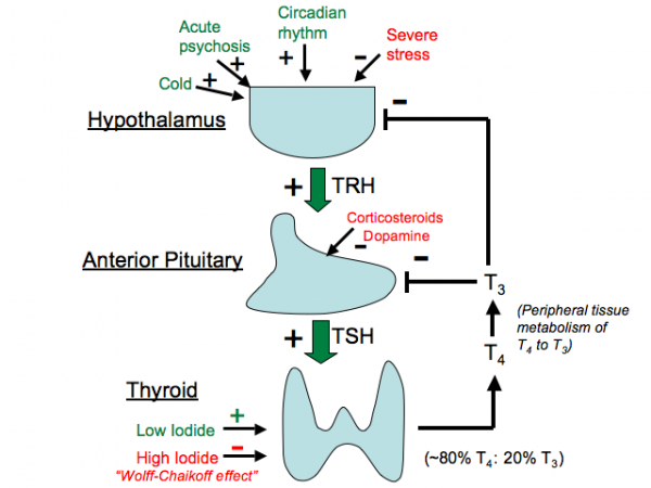 Thyroidregln