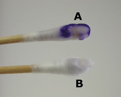 Visual appearance of one form of the oxidase test. A displays an oxidase positive bacteria, and B is the oxidase negative (source)