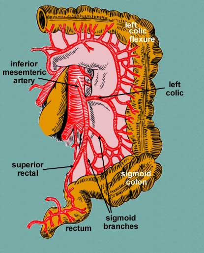 Anatomy of the inferior mesenteric artery (source)
