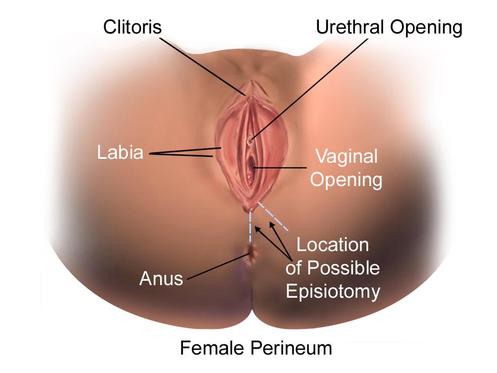 biologiya-vagina