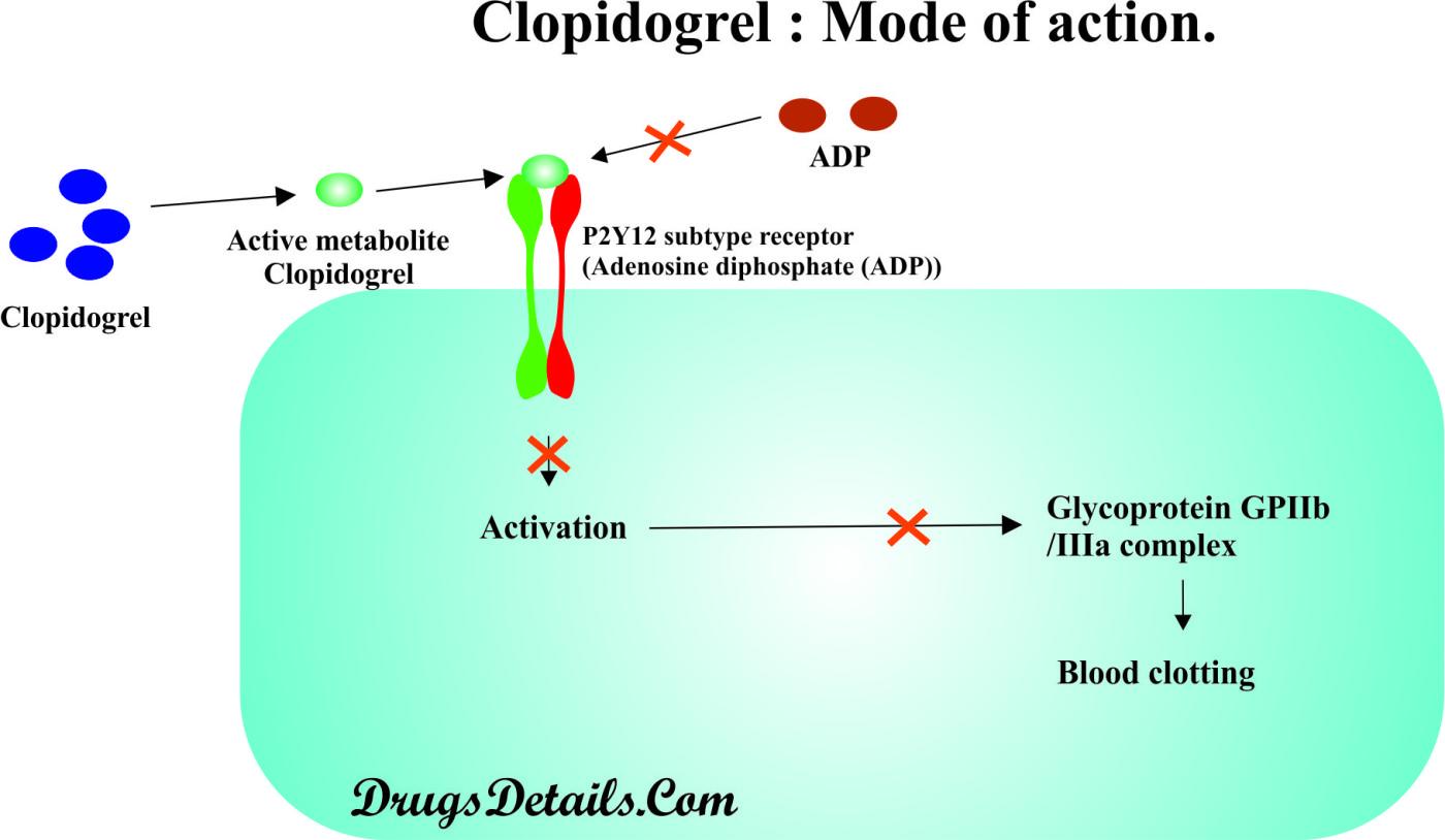 Clopidogrel mechanism of action (source)