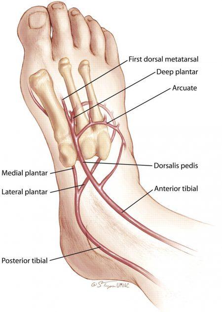 foot pulse