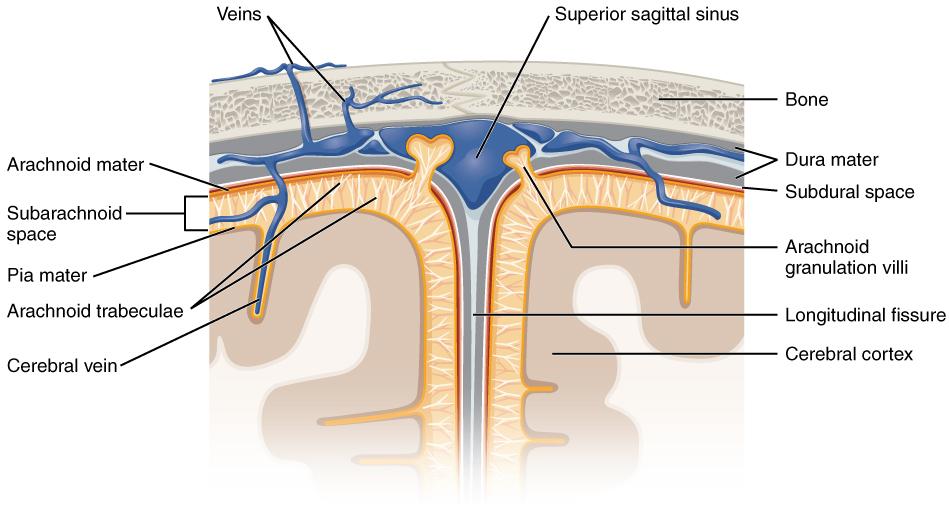 Subarachnoid Hemorrhage (SAH) - Stepwards