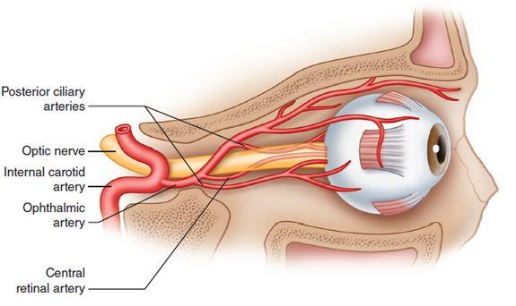 Ophthalmic Artery - Stepwards