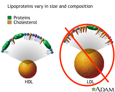 """All non-HDL lipoproteins are """"blocked"""" from the cholesterol quantification process when measuring HDL-cholesterol (source)"""