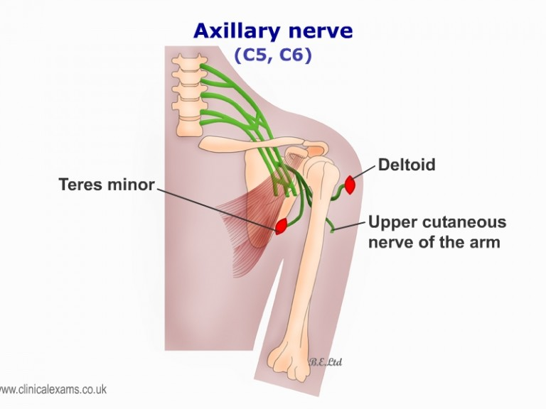 Show Axillary Nerve Diagram Block And Schematic Diagrams