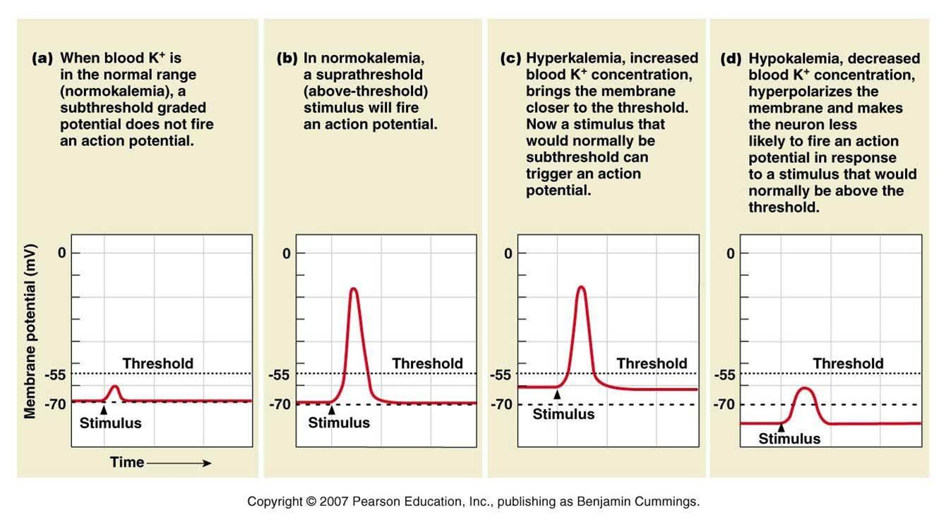 Potassium levels within the serum can dictate the resting potential of cells. This in turn will influence the conduction velocity of signals within the heart (source)