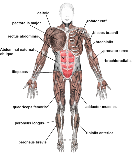 The musculoskeletal system can sometimes be involved as a cause of chest pain (source)