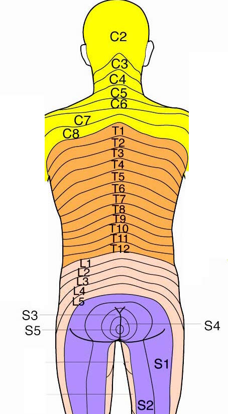 Sensory Dermatomes Of The Body Stepwards